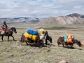 yaks-carrying-the-luggage-on-a-machen-kora