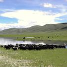 Tibetan_nomads