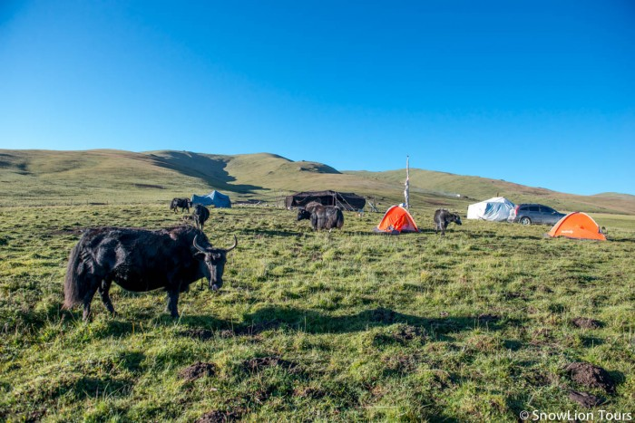 camp with Tibetan nomads
