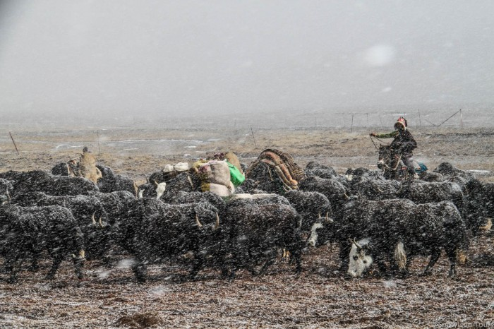Nomads in a snowy day