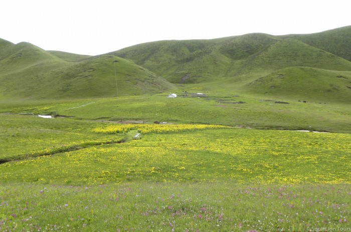Tibetan Grassland in the summer time