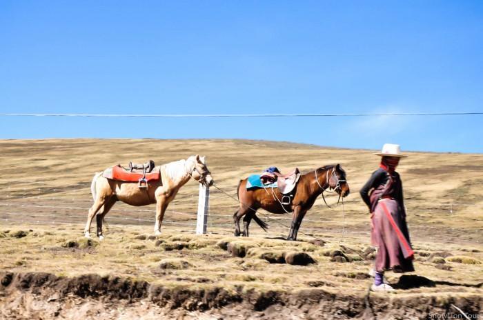Khampa girl with horses in Sershul