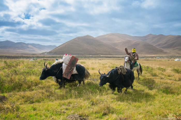 Horseback trek in the grassland