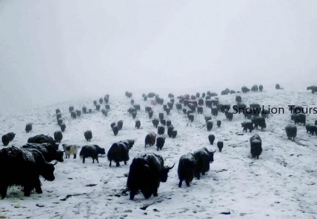 Qinghai Tibet tour