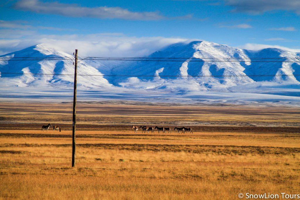 Tibet wildlife tour