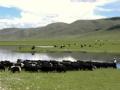 Yushu Nangchen Nomads