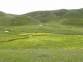 tibetan-grassland-in-the-summer-time