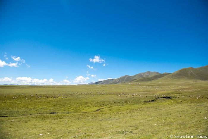 Tibetan grassland in Amdo