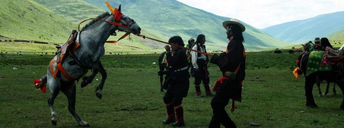 Tibetan Horse Festival