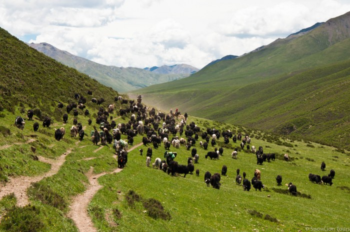 Tibetan nomads family moving
