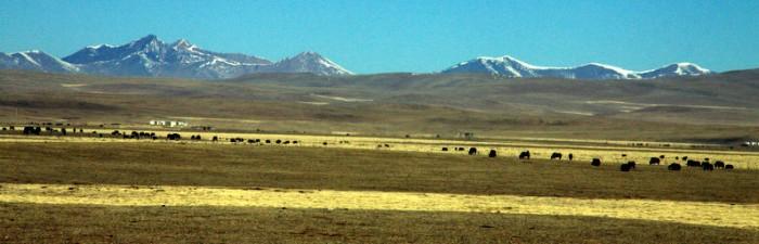 Xinghai Grassland