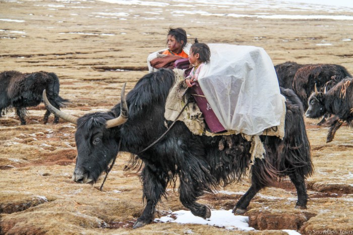 two nomads kids in baskets on the yak in Amdo Tibet