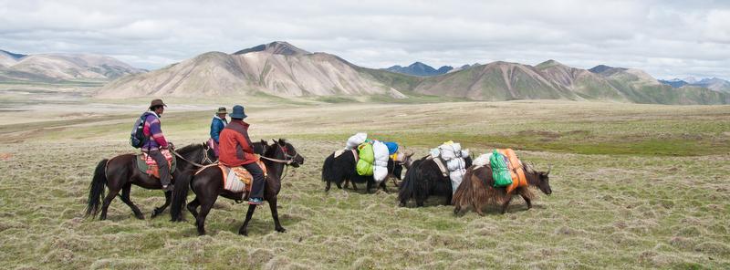 yaks and yakman during Amnye Machen Kora