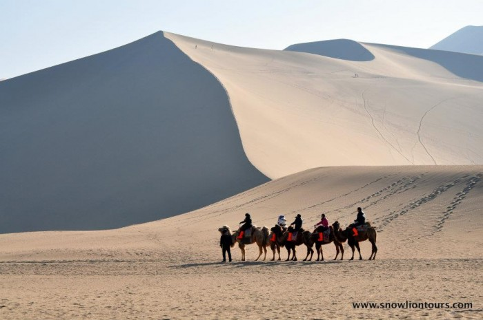 riding camels in Dunhuang