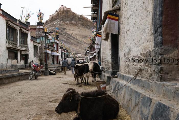 Tours to tibet