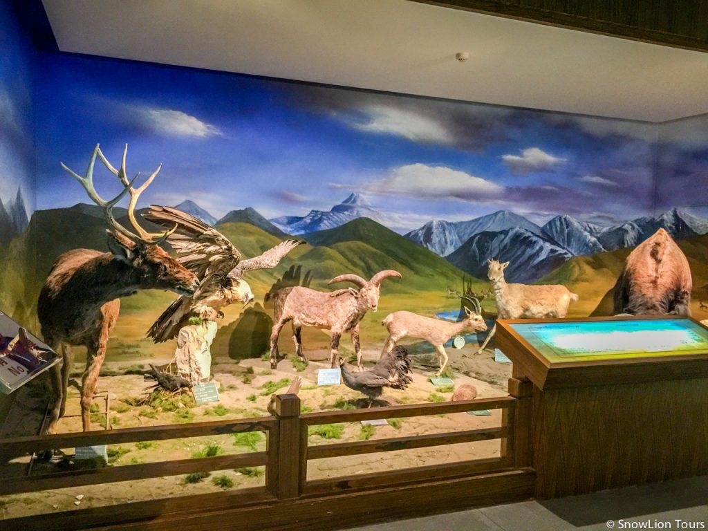 Tibet arts, wildlife in tibet
